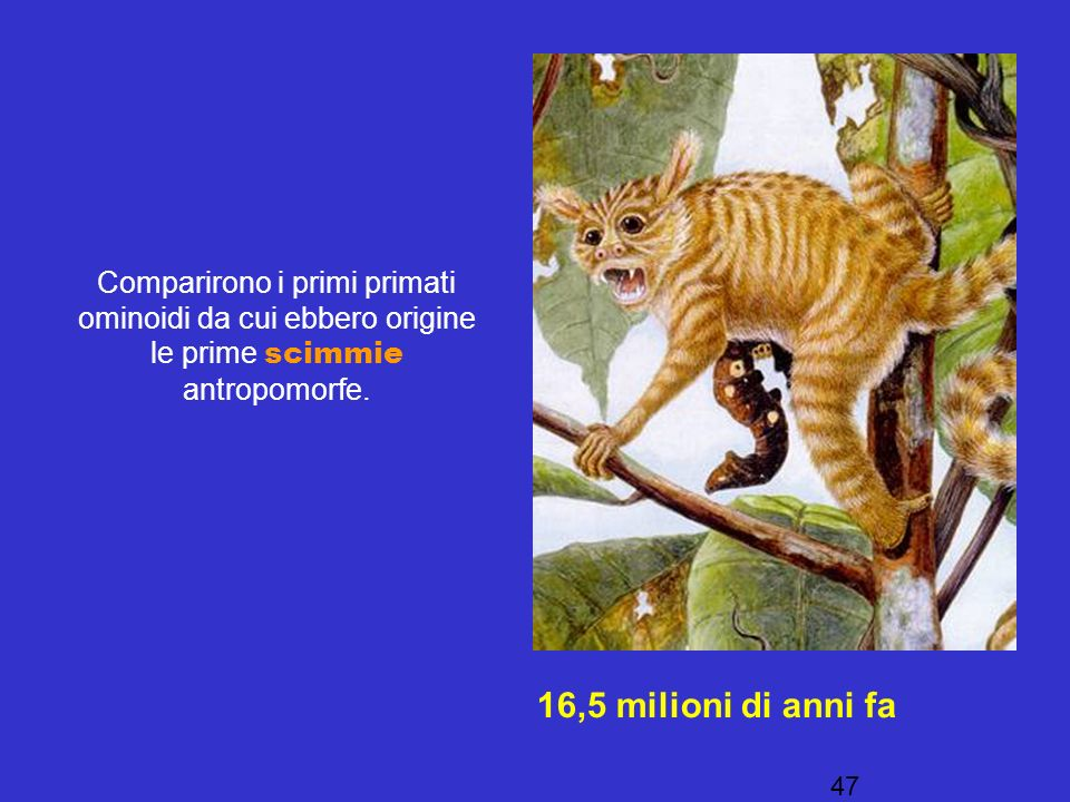 Comparirono i primi primati ominoidi da cui ebbero origine le prime scimmie antropomorfe.