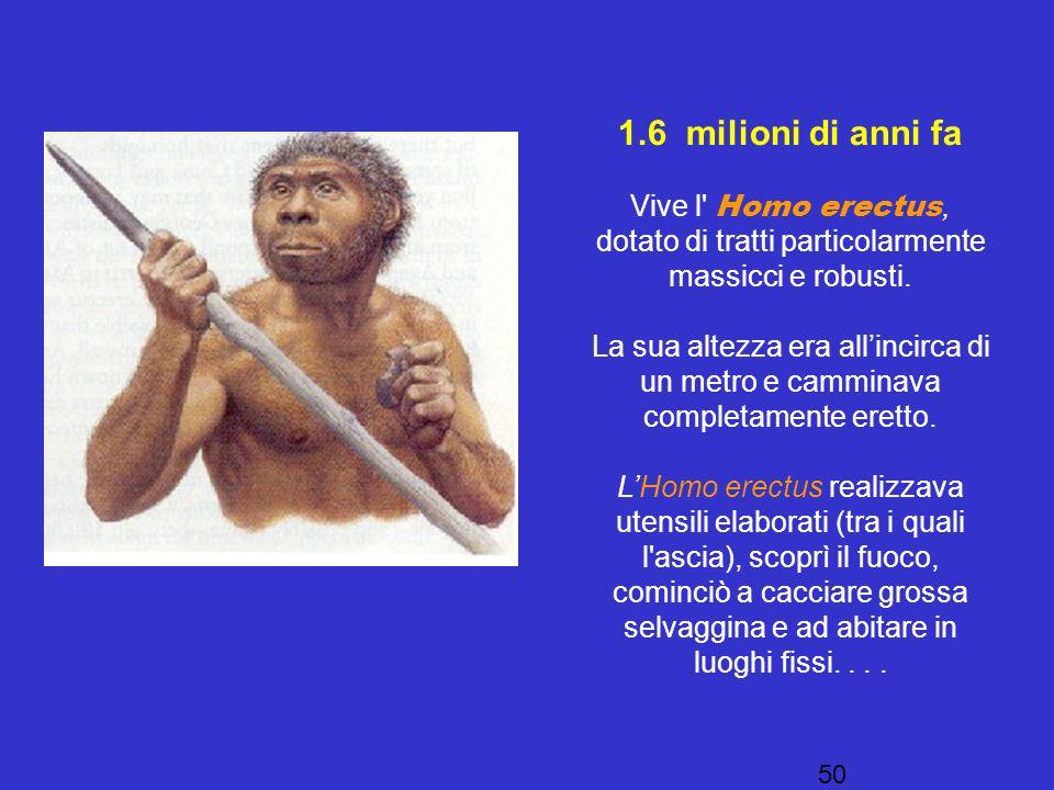 1.6 milioni di anni fa Vive l Homo erectus, dotato di tratti particolarmente massicci e robusti.