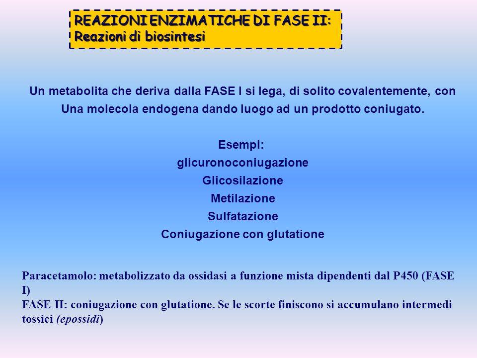 REAZIONI ENZIMATICHE DI FASE II: Reazioni di biosintesi