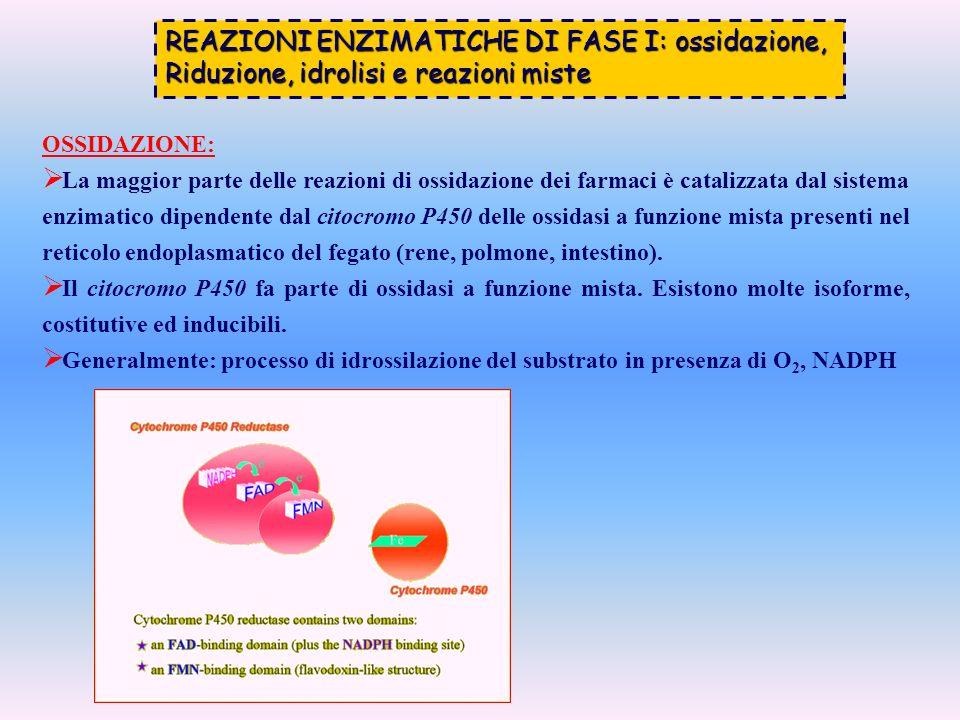 REAZIONI ENZIMATICHE DI FASE I: ossidazione,