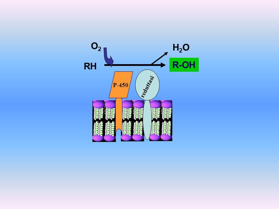 O2 H2O RH R-OH P-450 reduttasi