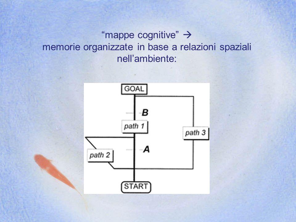 memorie organizzate in base a relazioni spaziali nell'ambiente: