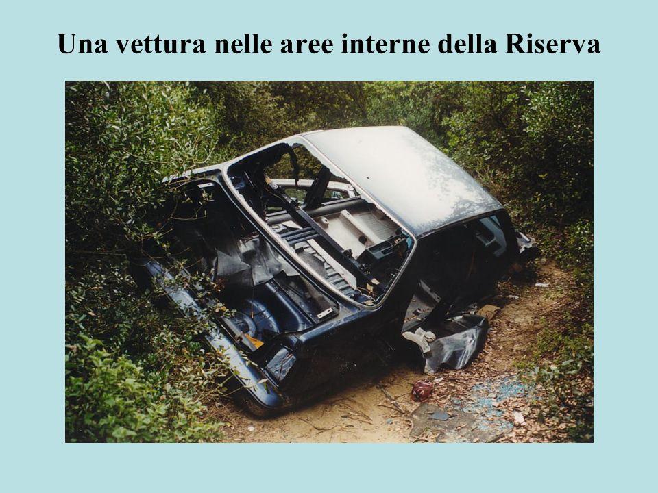 Una vettura nelle aree interne della Riserva