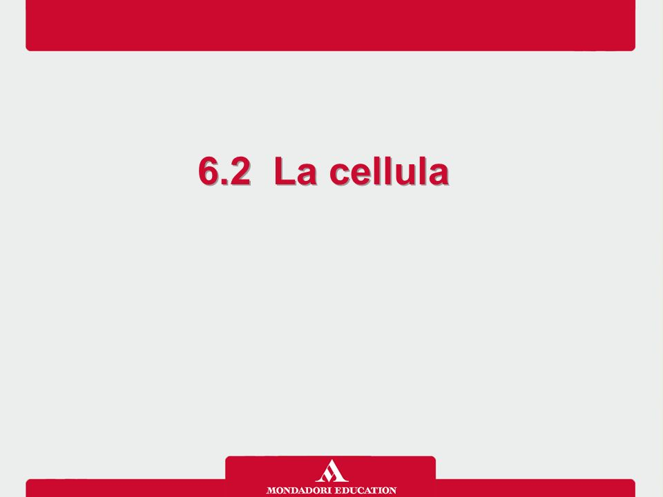 6.2 La cellula