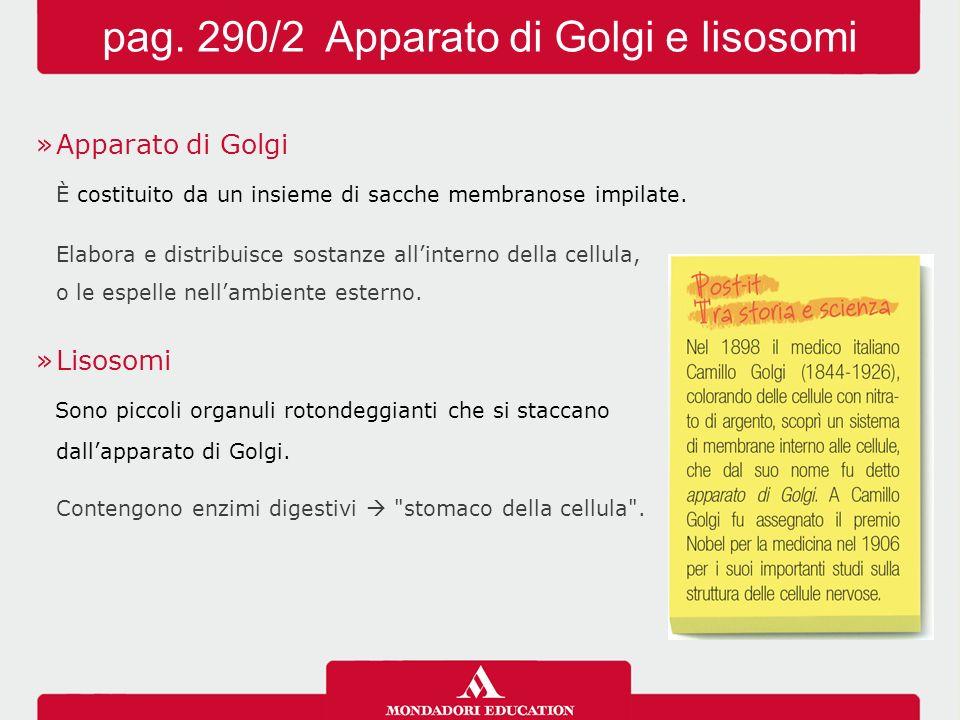 pag. 290/2 Apparato di Golgi e lisosomi