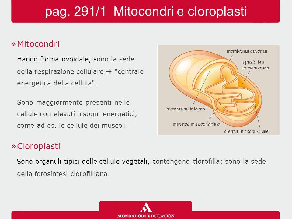 pag. 291/1 Mitocondri e cloroplasti