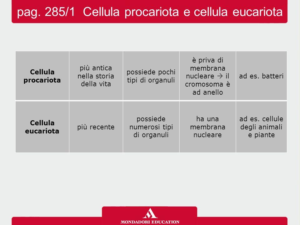 pag. 285/1 Cellula procariota e cellula eucariota