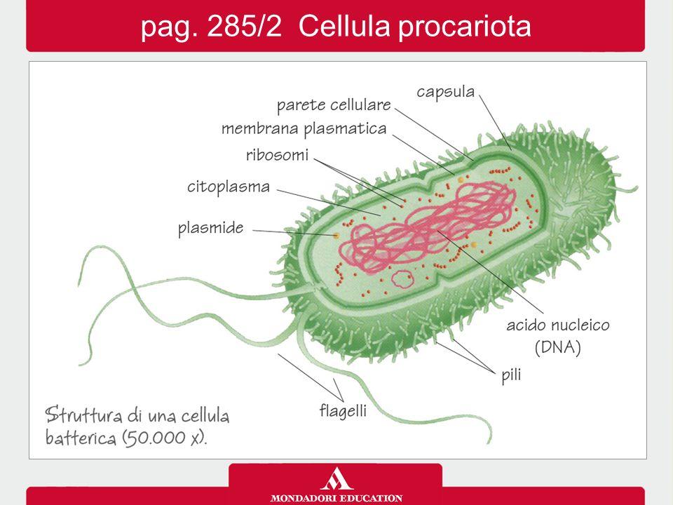 pag. 285/2 Cellula procariota