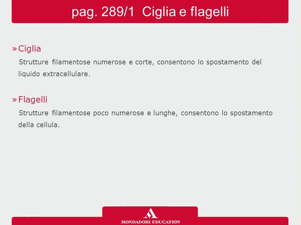 pag. 289/1 Ciglia e flagelli Ciglia Flagelli
