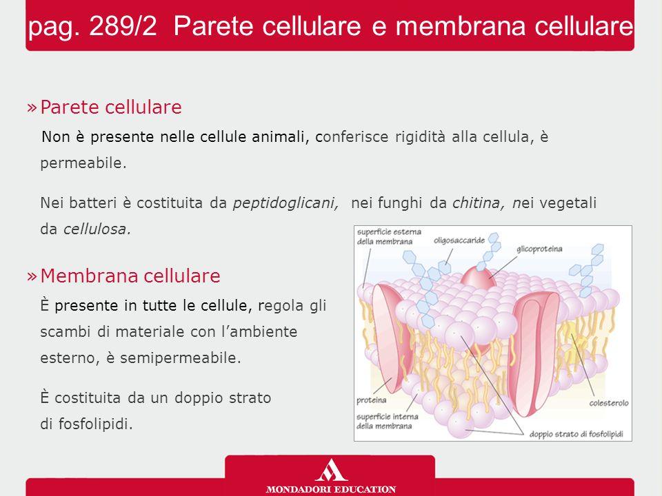 pag. 289/2 Parete cellulare e membrana cellulare