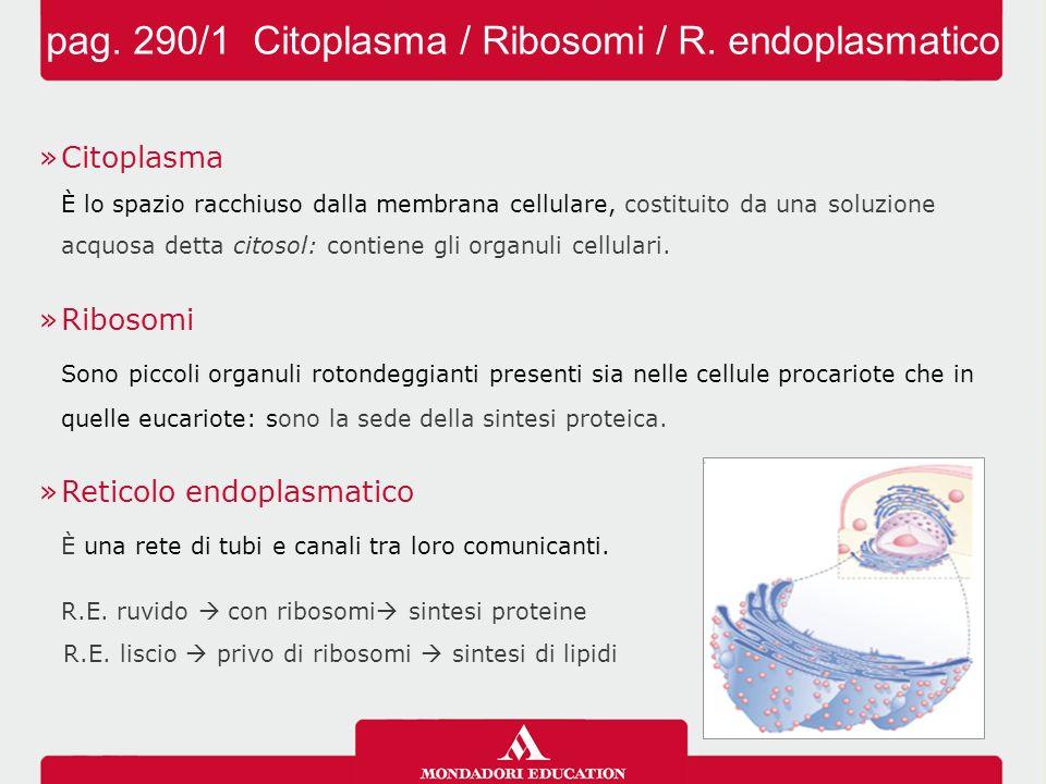 pag. 290/1 Citoplasma / Ribosomi / R. endoplasmatico