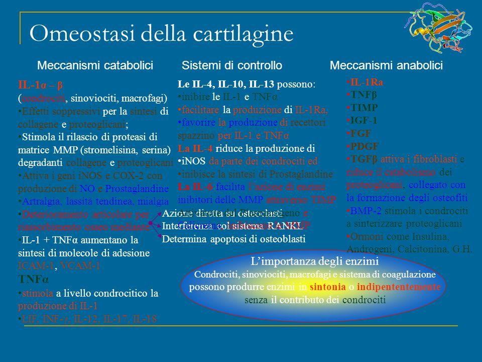 Omeostasi della cartilagine