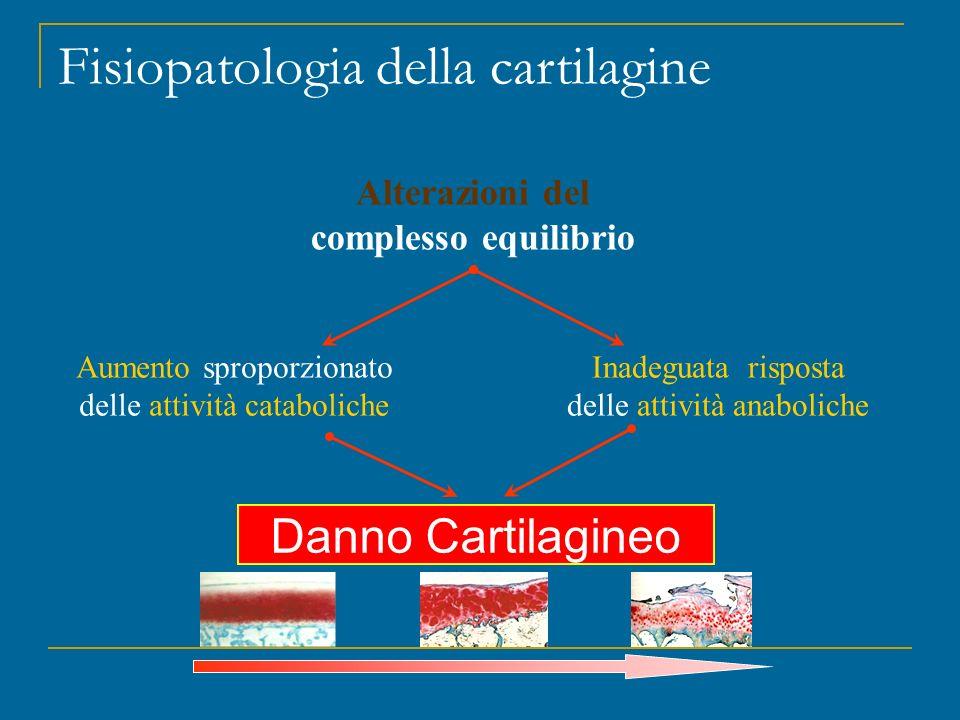 Fisiopatologia della cartilagine