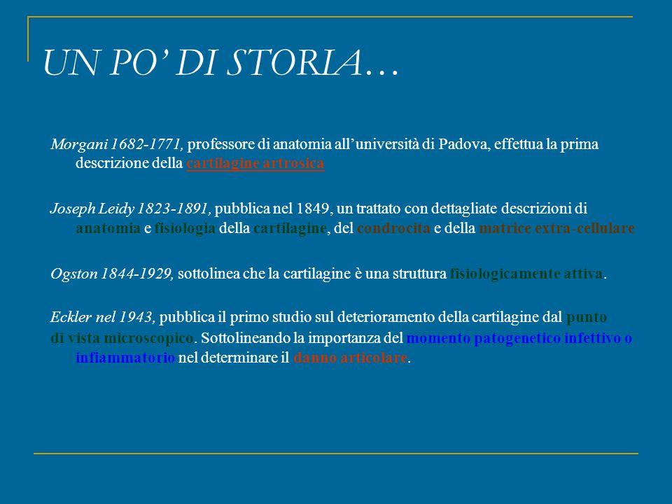UN PO' DI STORIA… Morgani 1682-1771, professore di anatomia all'università di Padova, effettua la prima descrizione della cartilagine artrosica.