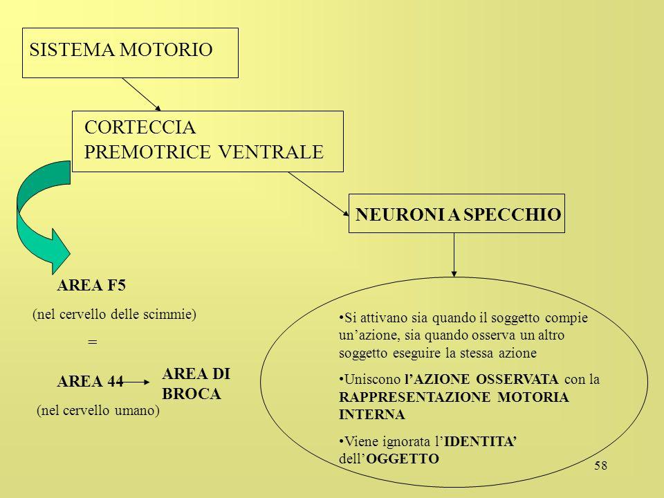 AREA F5 AREA 44 SISTEMA MOTORIO CORTECCIA PREMOTRICE VENTRALE