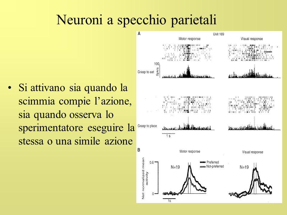 Neuroni a specchio parietali