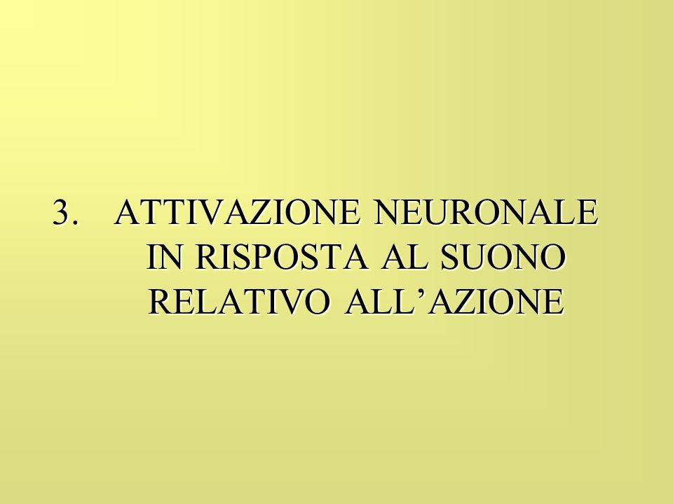 ATTIVAZIONE NEURONALE IN RISPOSTA AL SUONO RELATIVO ALL'AZIONE