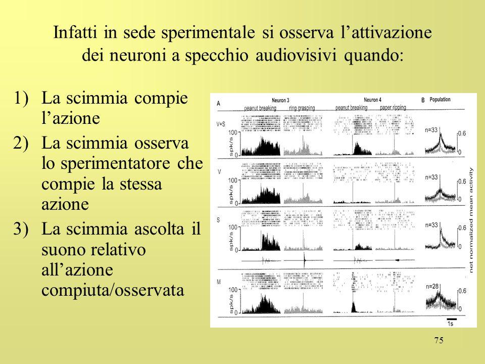 Infatti in sede sperimentale si osserva l'attivazione dei neuroni a specchio audiovisivi quando: