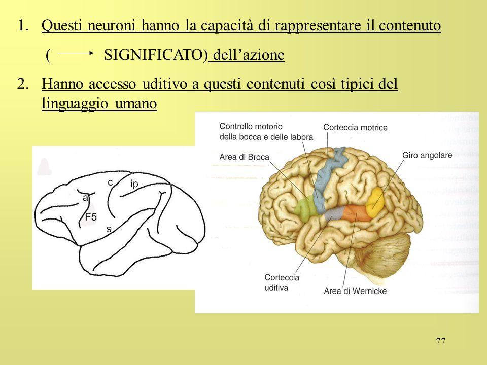 Questi neuroni hanno la capacità di rappresentare il contenuto