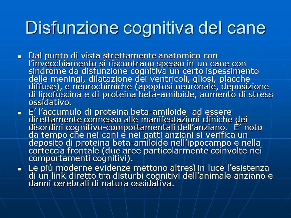 Disfunzione cognitiva del cane