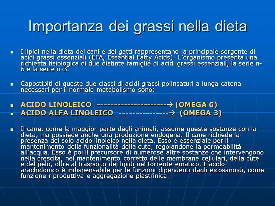 Importanza dei grassi nella dieta