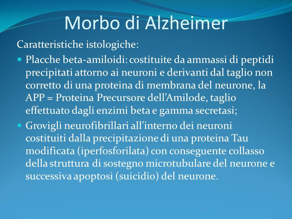 Morbo di Alzheimer Caratteristiche istologiche: