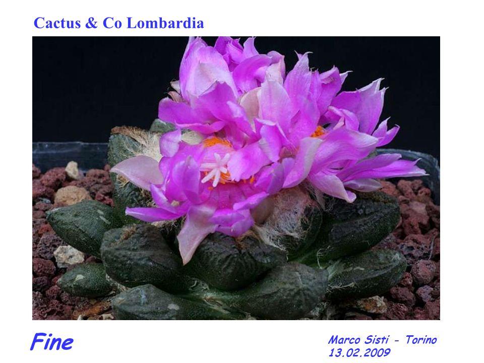 Cactus & Co Lombardia Fine Marco Sisti - Torino 13.02.2009