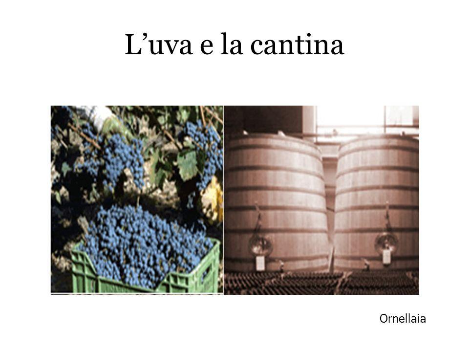 L'uva e la cantina Ornellaia