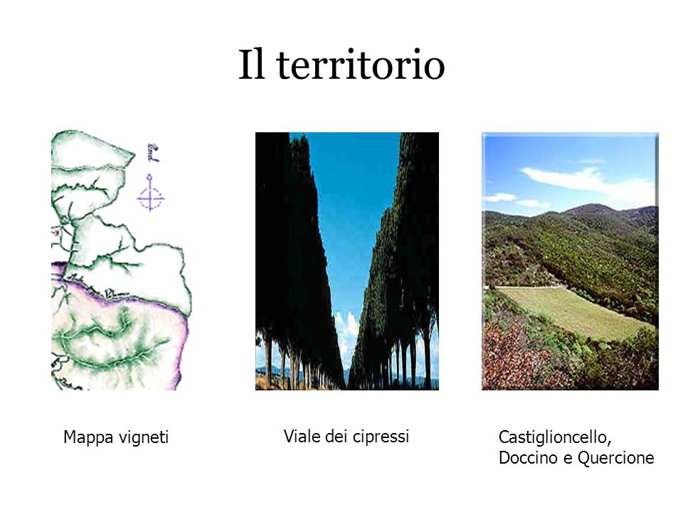 Il territorio Mappa vigneti Viale dei cipressi