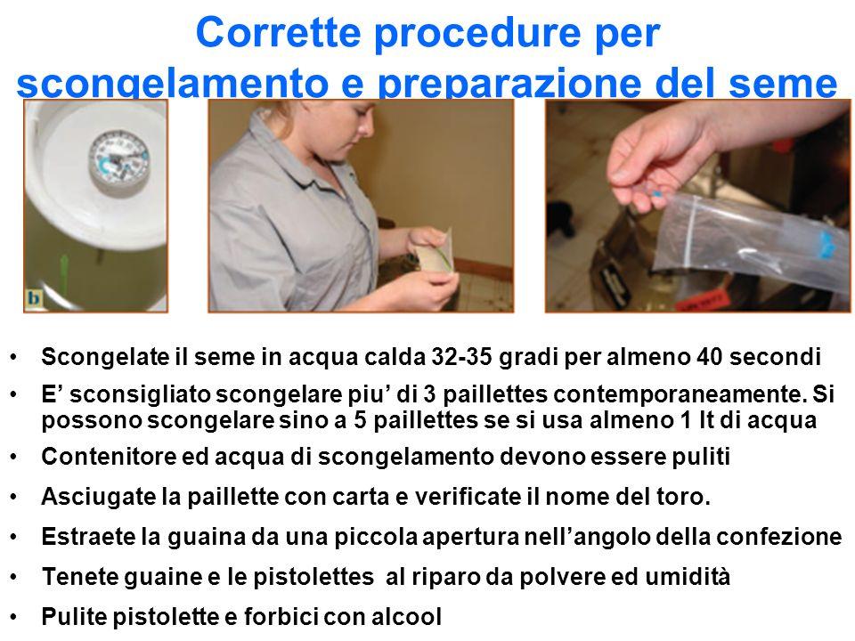 Corrette procedure per scongelamento e preparazione del seme