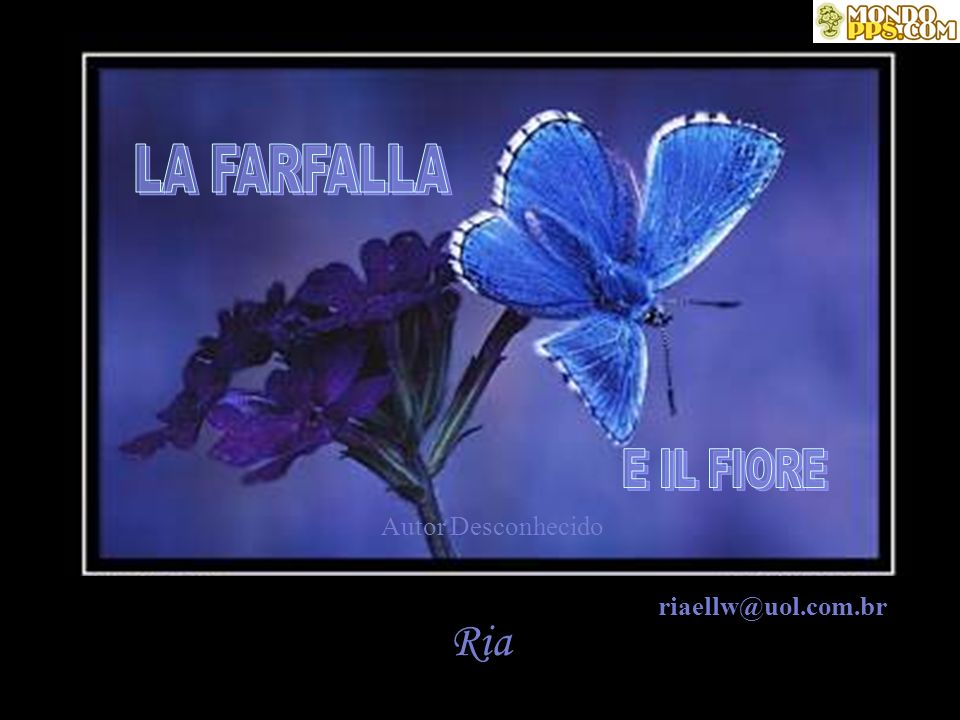 LA FARFALLA E IL FIORE Autor Desconhecido riaellw@uol.com.br Ria