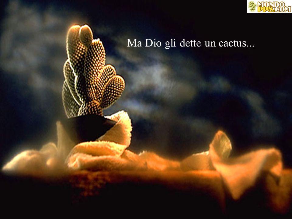 Ma Dio gli dette un cactus...