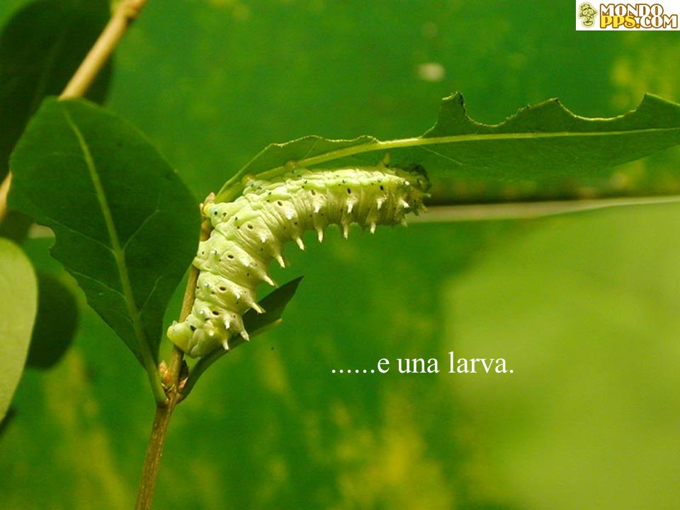 ......e una larva.