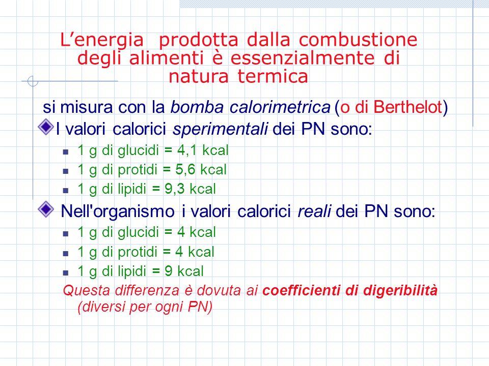 L'energia prodotta dalla combustione degli alimenti è essenzialmente di natura termica