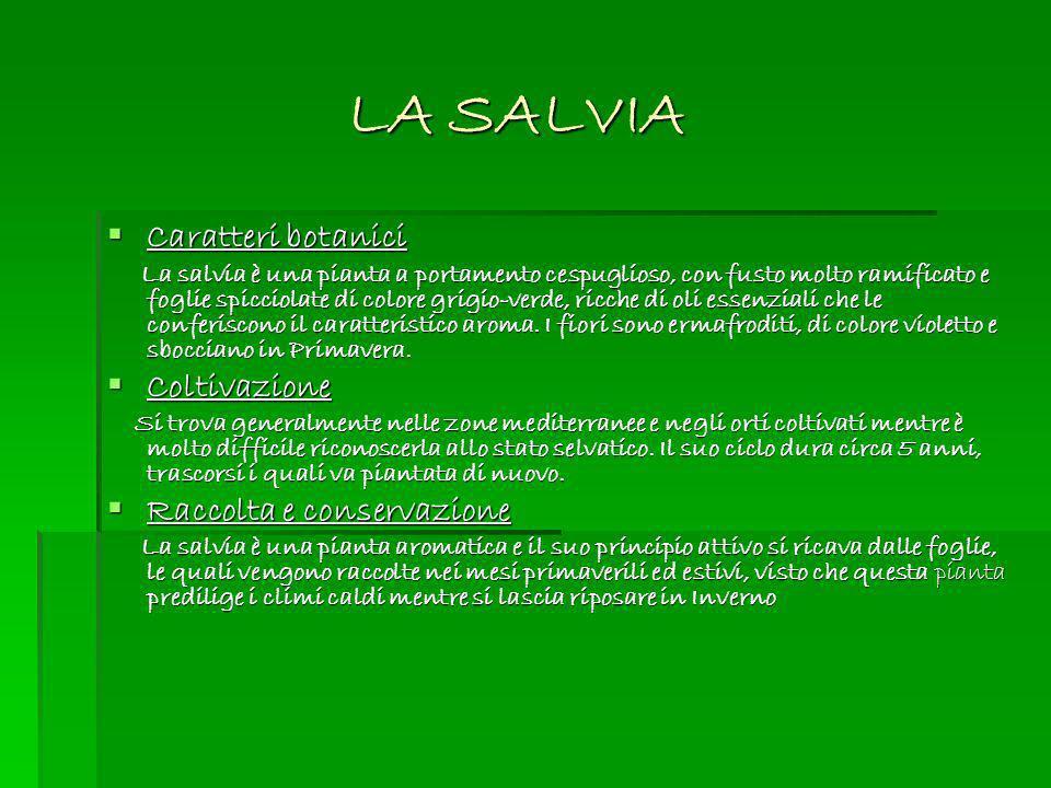 LA SALVIA Caratteri botanici Coltivazione Raccolta e conservazione