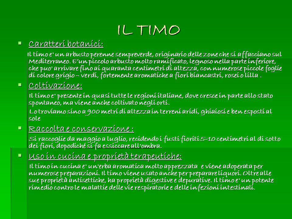 IL TIMO Caratteri botanici: Coltivazione: Raccolta e conservazione :