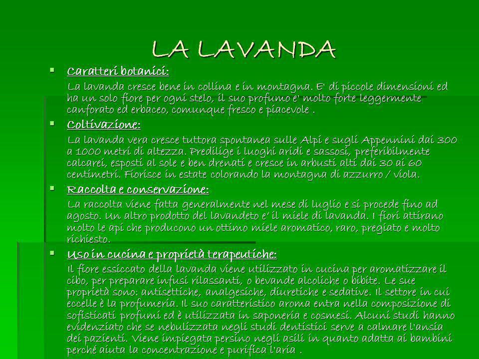 LA LAVANDA Caratteri botanici: Coltivazione: Raccolta e conservazione: