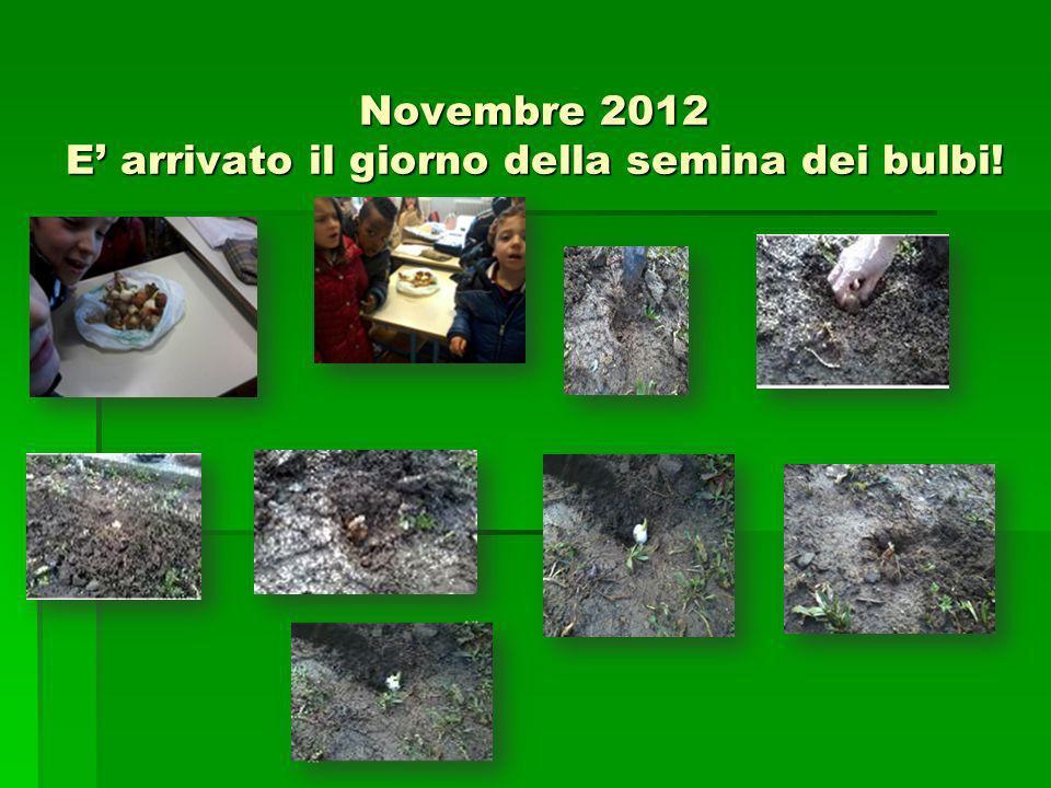 Novembre 2012 E' arrivato il giorno della semina dei bulbi!