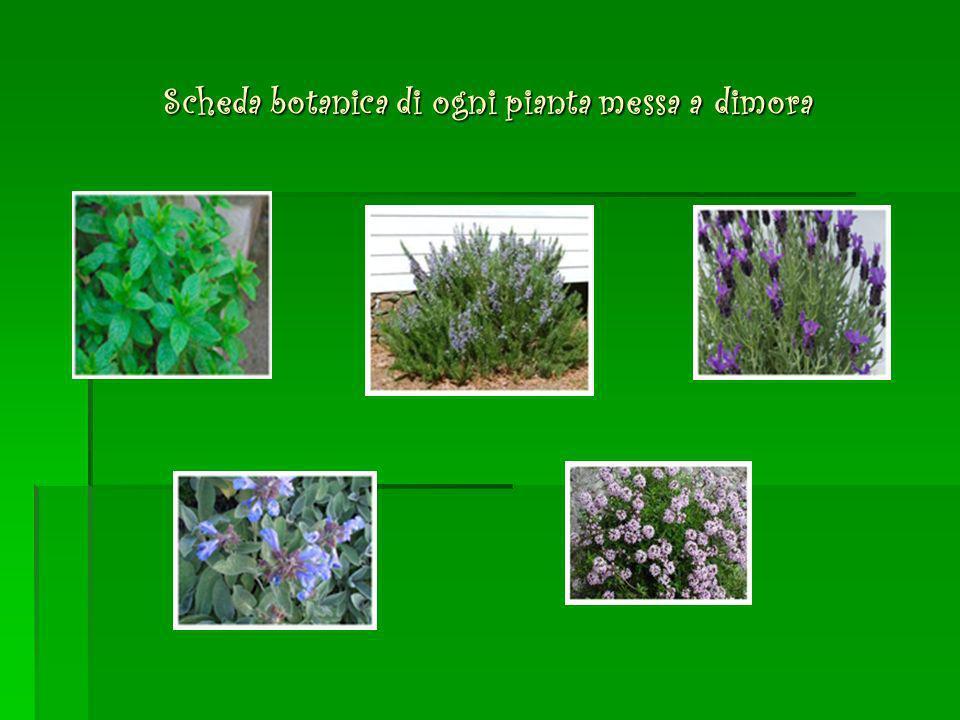 Scheda botanica di ogni pianta messa a dimora