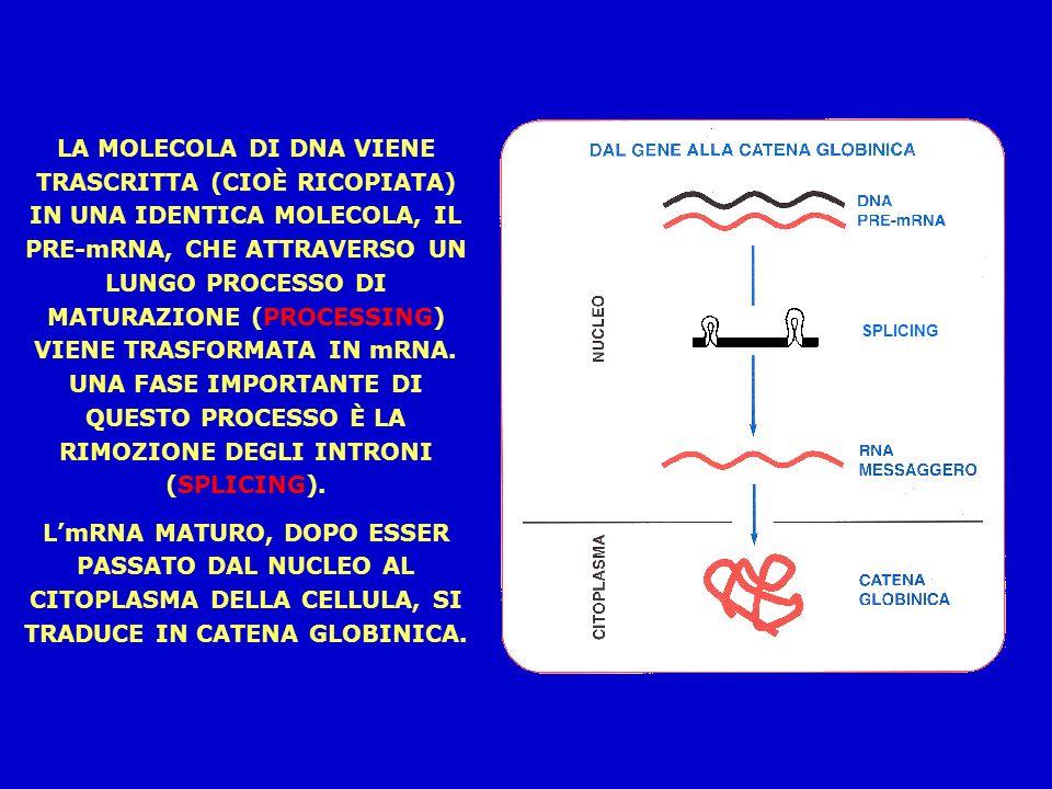 LA MOLECOLA DI DNA VIENE TRASCRITTA (CIOÈ RICOPIATA) IN UNA IDENTICA MOLECOLA, IL PRE-mRNA, CHE ATTRAVERSO UN LUNGO PROCESSO DI MATURAZIONE (PROCESSING) VIENE TRASFORMATA IN mRNA. UNA FASE IMPORTANTE DI QUESTO PROCESSO È LA RIMOZIONE DEGLI INTRONI (SPLICING).