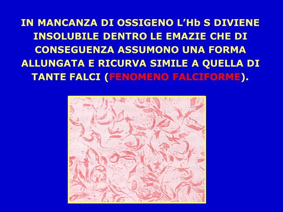 IN MANCANZA DI OSSIGENO L'Hb S DIVIENE INSOLUBILE DENTRO LE EMAZIE CHE DI CONSEGUENZA ASSUMONO UNA FORMA ALLUNGATA E RICURVA SIMILE A QUELLA DI TANTE FALCI (FENOMENO FALCIFORME).