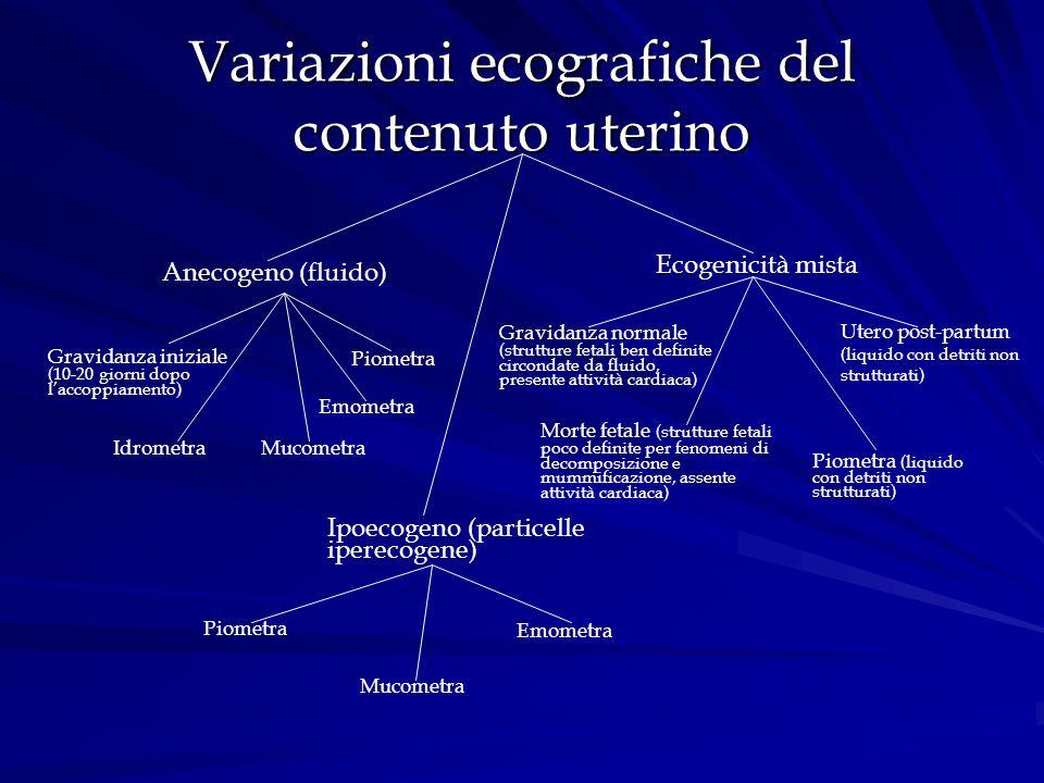 Variazioni ecografiche del contenuto uterino