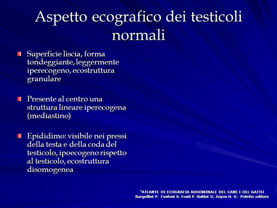 Aspetto ecografico dei testicoli normali