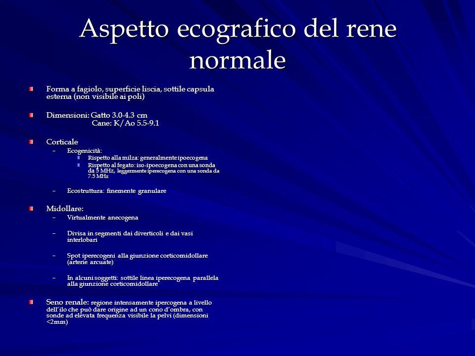 Aspetto ecografico del rene normale