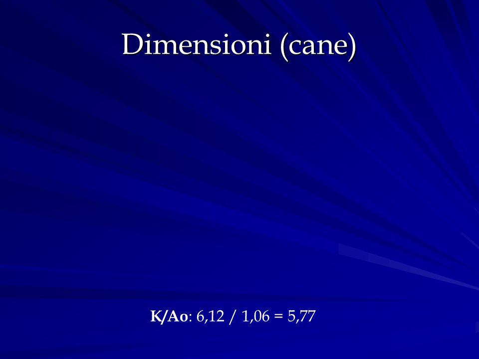 Dimensioni (cane) K/Ao: 6,12 / 1,06 = 5,77
