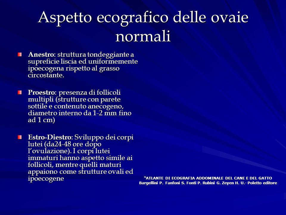 Aspetto ecografico delle ovaie normali