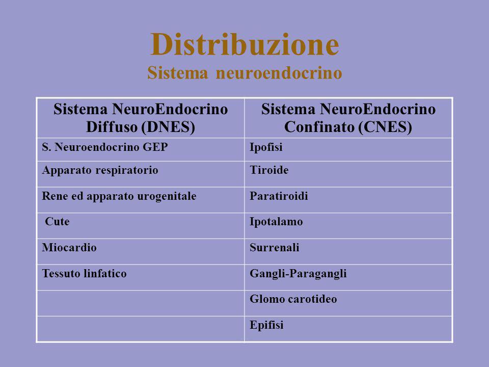 Distribuzione Sistema neuroendocrino