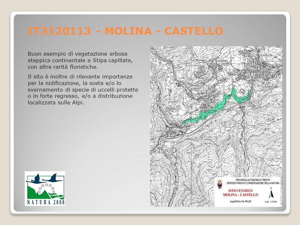 IT3120113 - MOLINA - CASTELLO Buon esempio di vegetazione erbosa steppica continentale a Stipa capillata, con altre rarità floristiche.