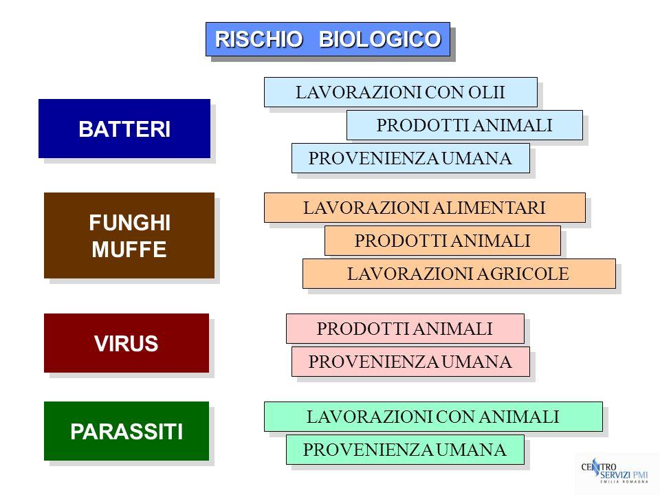 RISCHIO BIOLOGICO BATTERI FUNGHI MUFFE VIRUS PARASSITI