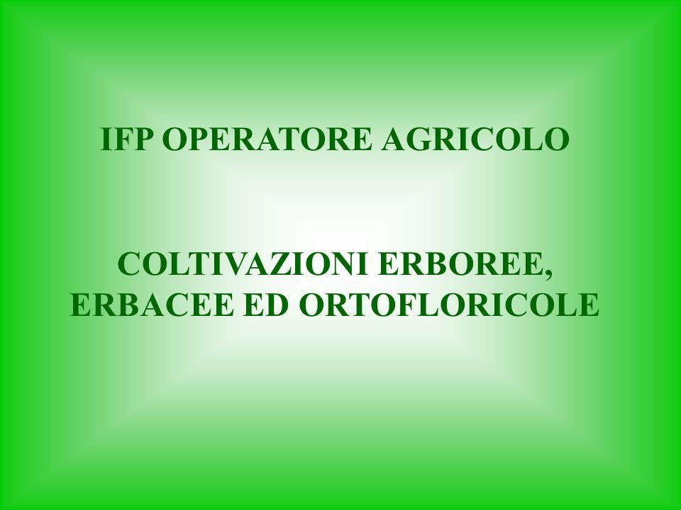 IFP OPERATORE AGRICOLO COLTIVAZIONI ERBOREE, ERBACEE ED ORTOFLORICOLE